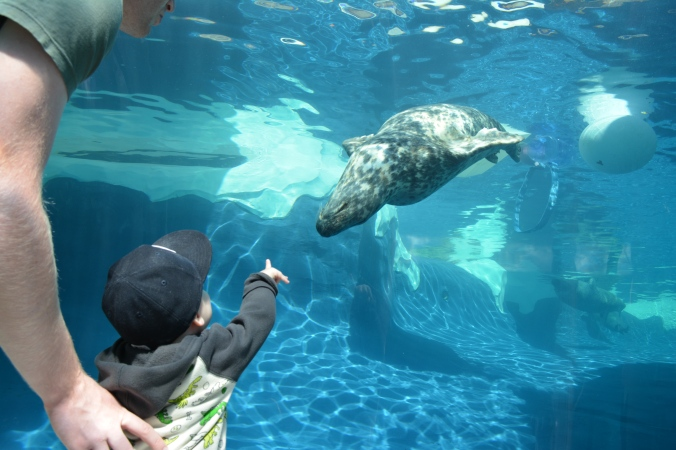 Ricky's favorite- underwater seals!